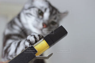 猫 - No.529223