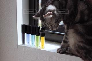 猫の写真・画像素材[531854]