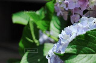花の写真・画像素材[539767]
