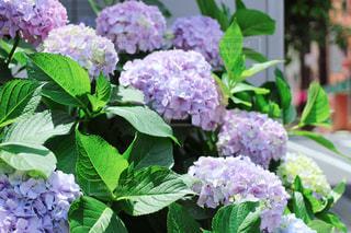 花の写真・画像素材[539768]