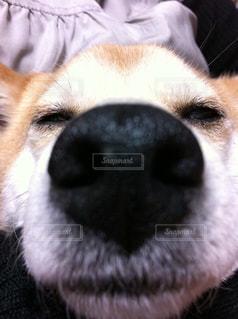 犬,ペット,寝顔