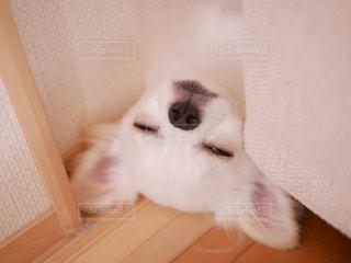 犬の写真・画像素材[473096]