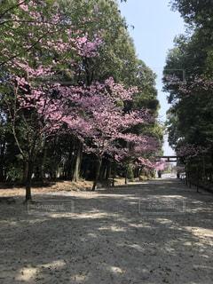 陽光桜の妖精の写真・画像素材[1140835]