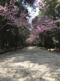 滋賀県,近江神宮,2018年3月末