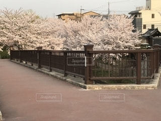 京都,伏見であい橋,2018年3月末