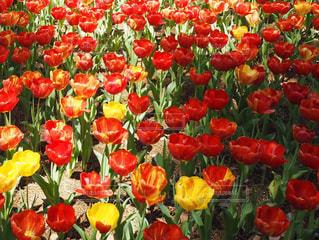 花の写真・画像素材[526076]