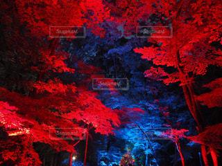 木の写真・画像素材[526148]
