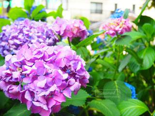 花の写真・画像素材[540506]