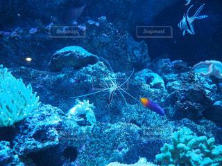 水面下を泳ぐ魚たち - No.706213