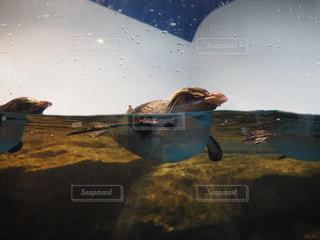 水の中を泳ぐ鳥 - No.706220