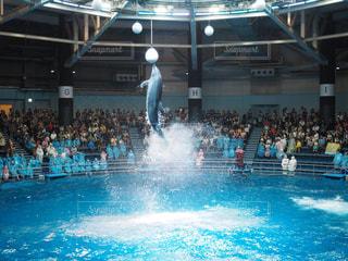 プールの水の男の写真・画像素材[706224]