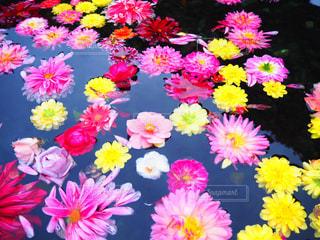 色とりどりの花の写真・画像素材[1542794]