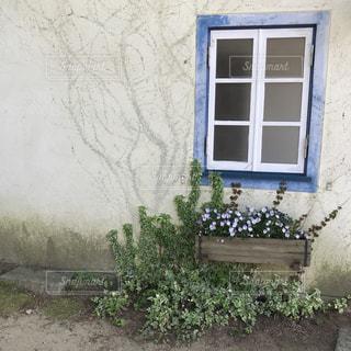 花の写真・画像素材[470369]