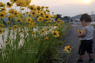 花の写真・画像素材[621670]