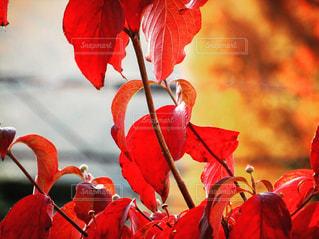 秋の写真・画像素材[526005]