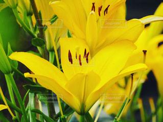 花の写真・画像素材[595149]