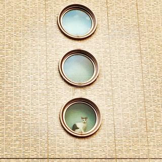 猫の写真・画像素材[472465]