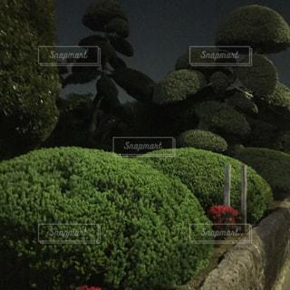 庭の写真・画像素材[473769]