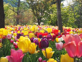 花の写真・画像素材[469773]