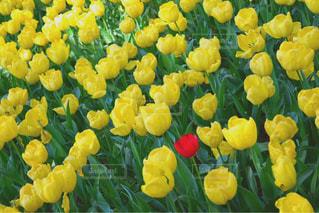 お花畑の写真・画像素材[469808]