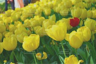 お花畑の写真・画像素材[469809]