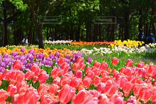 お花畑の写真・画像素材[470511]