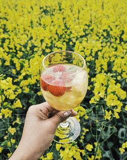夏,花畑,黄色,フルーツ,オシャレ,アルコール,サングリア