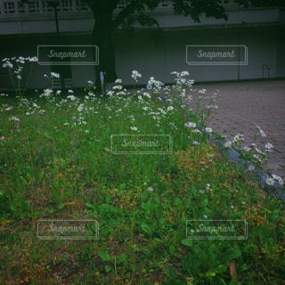 花の写真・画像素材[472503]