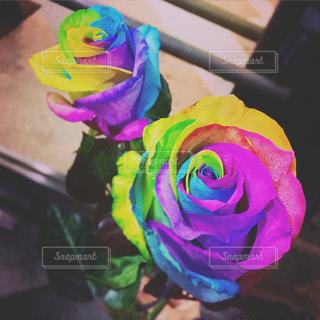 花の写真・画像素材[474680]
