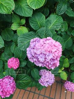 花の写真・画像素材[544074]