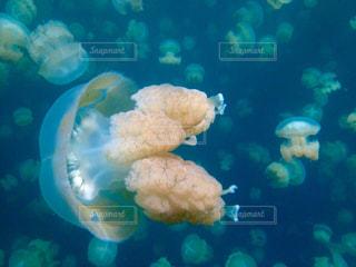 テディー ・ ベアの水中ビューの写真・画像素材[798985]