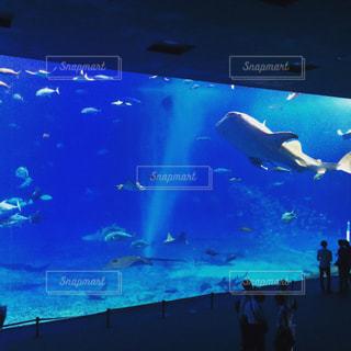 水族館を飛んで人のグループ - No.919141