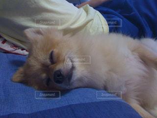犬の写真・画像素材[473829]