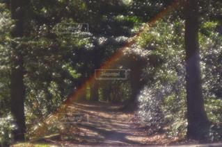 森林 - No.472856