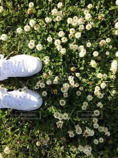 白スニーカーとシロツメクサの写真・画像素材[472891]