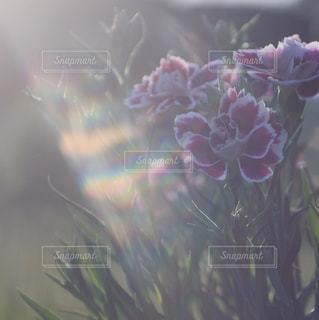花の写真・画像素材[499372]