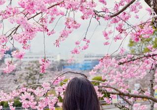 桜と女の子の写真・画像素材[849275]