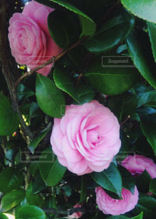 近くの花のアップの写真・画像素材[849280]