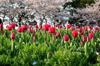 ピンクの花のグループの写真・画像素材[1126820]