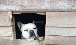 犬の写真・画像素材[472506]
