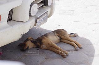 犬,夏,Smile,暑い,外国,dog,眠い,ボリビア,南米
