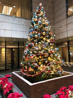 冬,クリスマス,クリスマスツリー
