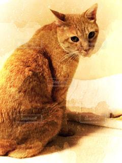 猫,動物,悲しい,茶トラ,さびしい,ヤキモチ