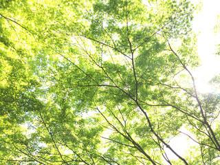 木の写真・画像素材[474946]