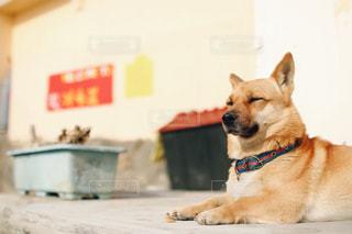 犬の写真・画像素材[474352]