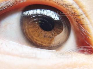 茶色,目,瞳