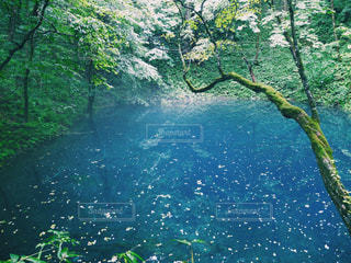 青い池 - No.769948