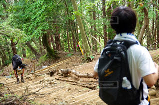 森の横に立っている少年 - No.769960