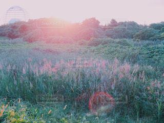 近くに、背景の木と緑のフィールドの - No.769972