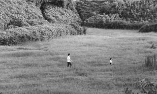 乾いた草のフィールド上を歩く羊の群れの写真・画像素材[813387]